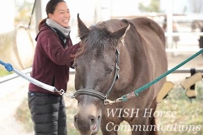 馬の表情 満足