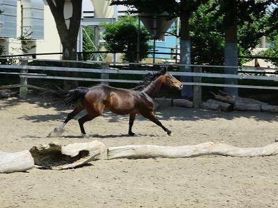 健康でよく調教された馬に乗ればみんな上達するよ