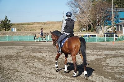 馬を蹴ったり叩いたりしても、虐待は上達しても乗馬は上達しない