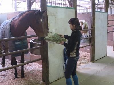 楽しい馬のお世話