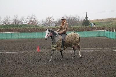 馬と遊ぼう