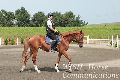 乗馬は馬もリラックス