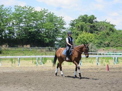 馬と楽しい乗馬体験