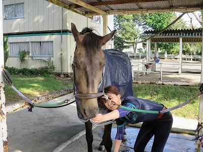 素晴らしい馬とのコミュニケーション