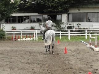 馬場馬術運動もしっかり指導します