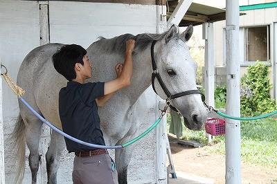 馬のうっとりまつ毛