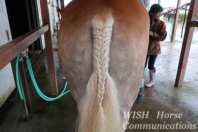 馬の尻尾編み