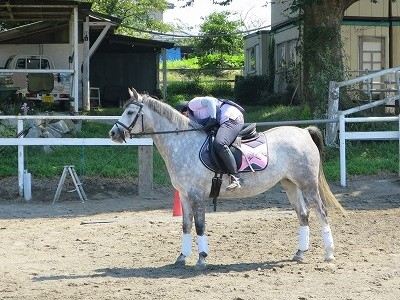 乗馬が上手くなりたい!