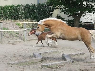 馬を馬らしく