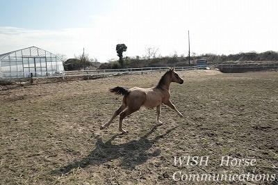 子馬のルンルンダッシュ