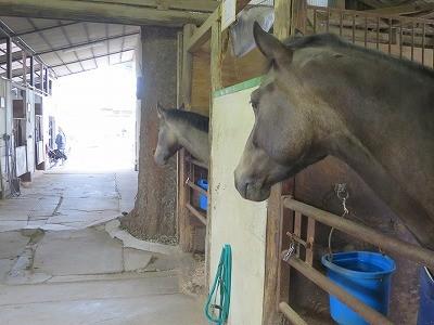 馬が甘えて鼻をならす