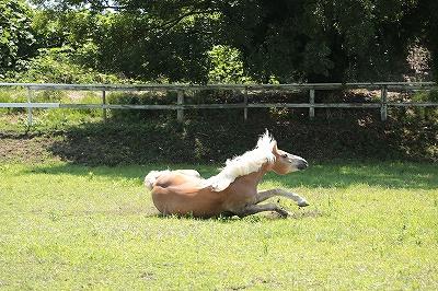 馬の照れ隠し
