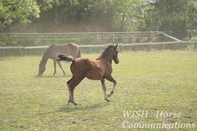 乗馬は馬次第