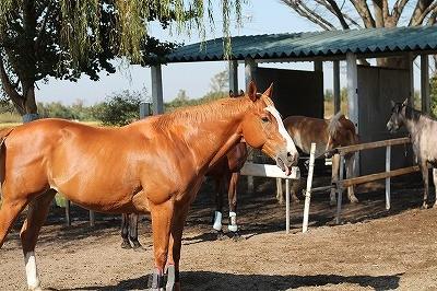 馬のてへぺろ表情