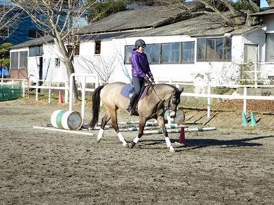 馬は柔軟が従順へ