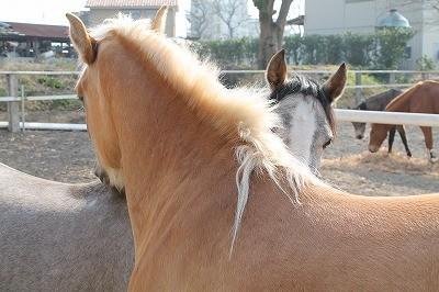 馬の心を知ろう