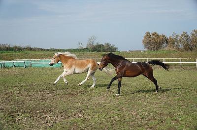 馬たちのダッシュ!