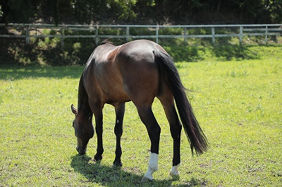 馬を幸せにするために生きています