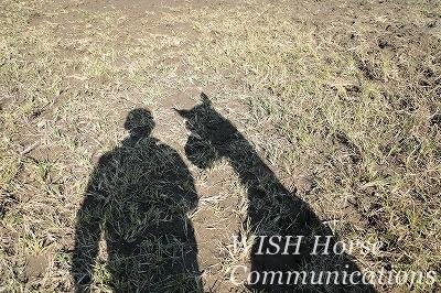 ウィッシュホースコミュニケーションズ