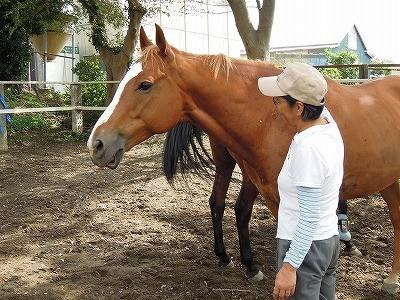 馬と仲良し上手