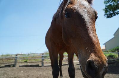 馬とラブラブ