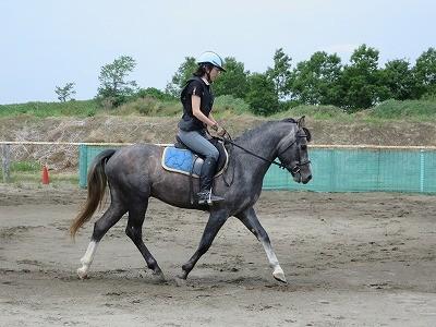 楽しい乗馬