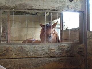 馬の可愛い表情