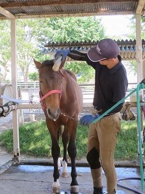 馬の心をくみ取る