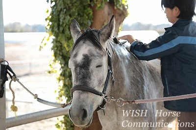 シャンプーが気持ちいい馬