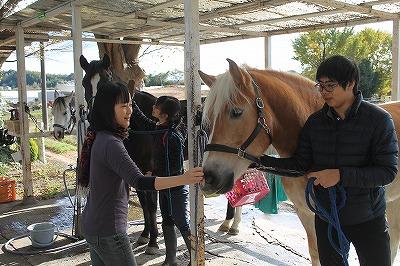 馬に差し伸べる優しい手
