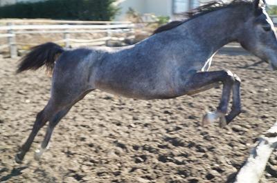 運動神経の良い馬は見ていてびっくり!