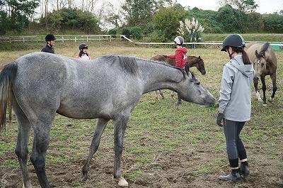 馬への愛情の伝え方講習会