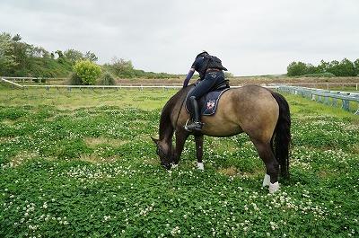 馬とクローバー