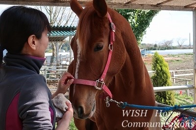 馬の話が伝わる乗馬