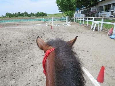 新馬調教 人を乗せたバランスを覚える