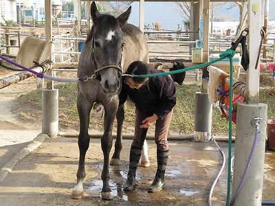 馬を健康にする手入れ