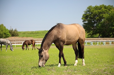 馬が好きだから目指すこと