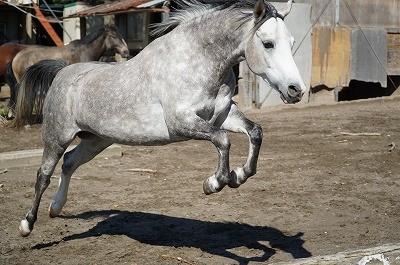 馬の能力を伸ばす