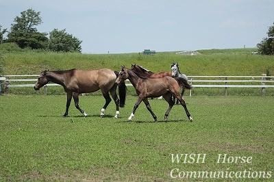 乗馬の生産