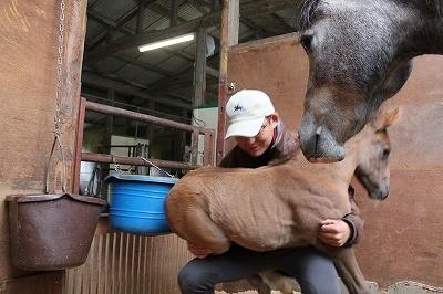 馬の成長を体験
