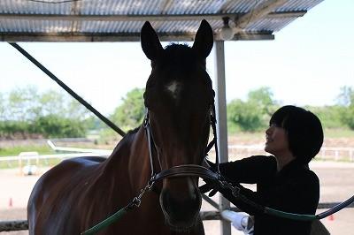 人と馬の美しい関係