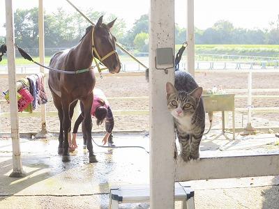 乗馬クラブの猫