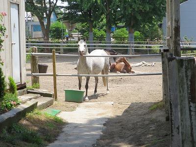 馬との絆を感じてね
