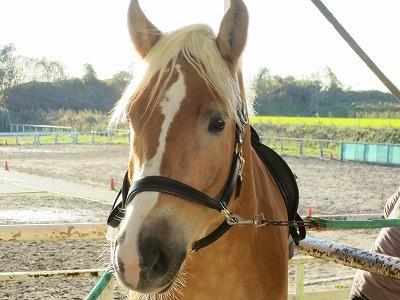 乗馬の基本は馬と仲良くなること