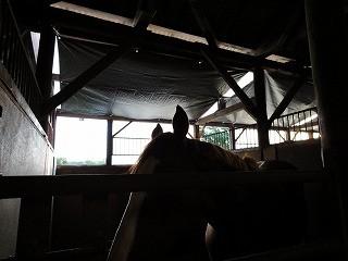 馬に日影を