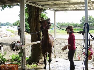 新馬調教 馬の心を作る