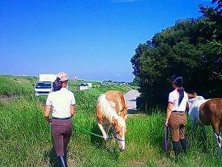 馬の散歩を体験