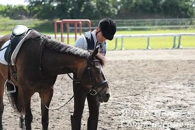馬が甘える乗馬