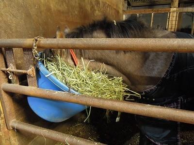 食べるのに夢中な馬