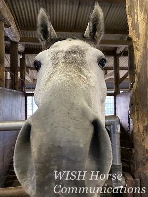 優しい馬たち